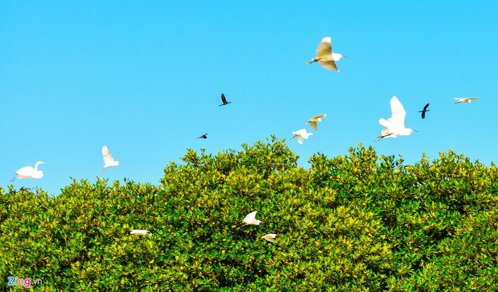 Cồn Chim đang được quy hoạch xây dựng phát triển thành khu du lịch sinh thái cộng đồng theo hướng chú trọng giữ gìn vẻ hoang sơ của đầm Thị Nại. Ngoài vẻ đẹp hệ sinh thái đa dạng với các loài thủy sản có giá trị, thảm cỏ biển ngày càng được phục hồi và phát triển, quần thể các loài chim, cò đặc hữu và các loài chim di trú về đây tho mùa.