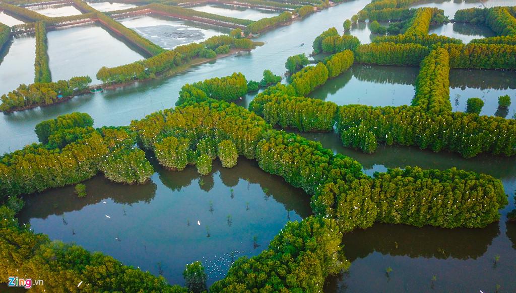 Từ trên cao nhìn xuống, hàng nghìn con cò bay về tổ ấm trên rừng đước giữa đầm phá mênh mông, du khách ngỡ như tuyết đang rơi giữa miền sông nước này.