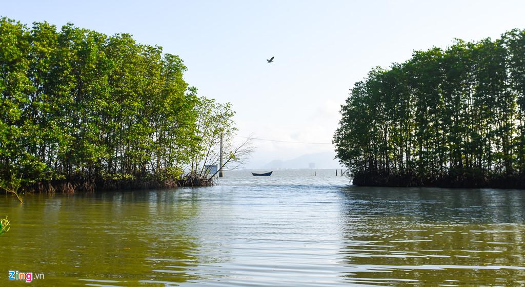 Lối vào khu rừng ngập mặn trông hệt cánh cửa mở toang giữa đầm Thị Nại đón chào du khách.