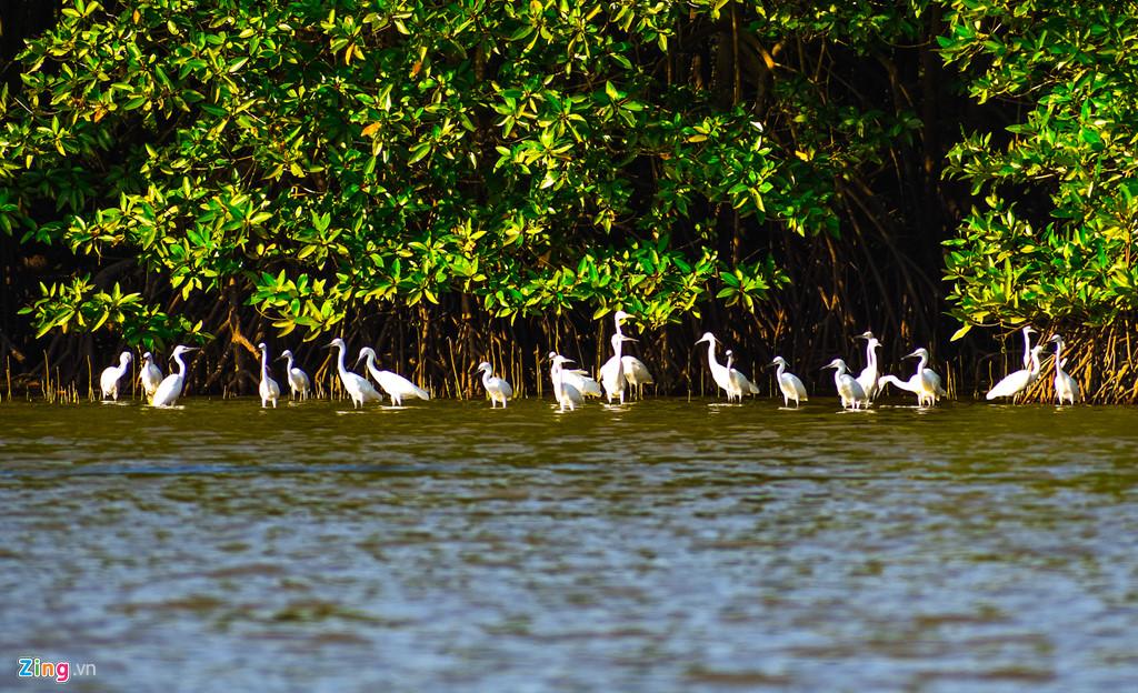 Loài cò kiếm ăn dày đặc ở rừng ngập mặn giữa đầm Thị Nại. Theo kết quả nghiên cứu của các nhà khoa học, hệ động vật nơi đây vô cùng phong phú với khoảng 64 loài phù du, 76 loài cá, hàng trăm loài chim, trong đó 23 loài thuộc nhóm chim nước và chim di cư, 10 loài chim rừng về trú ngụ ở Cồn Chim.