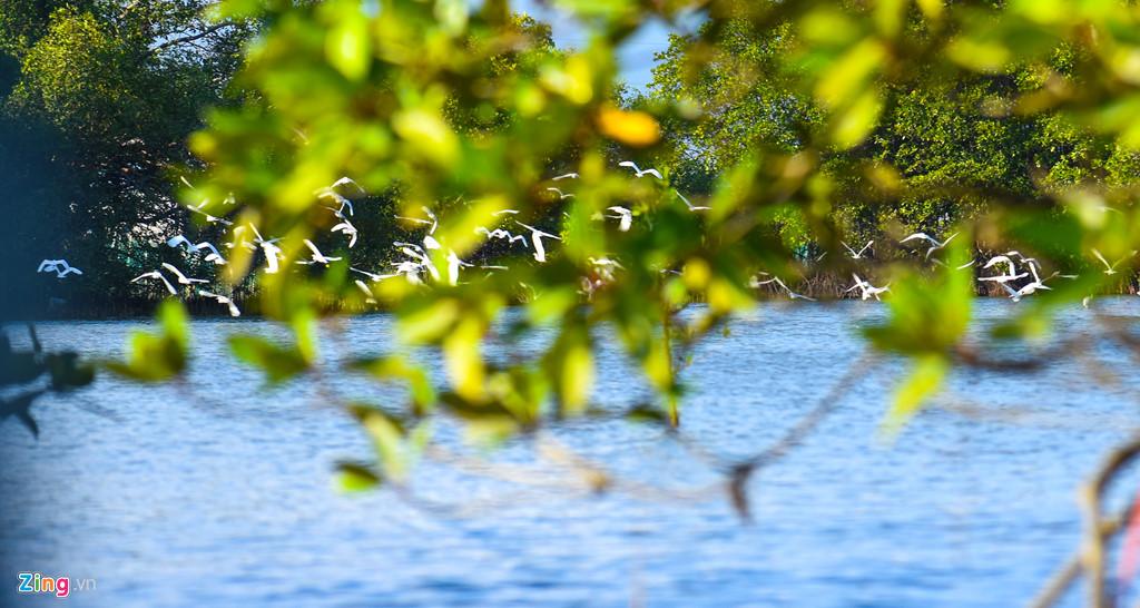 Đi ghe vào giữa rừng đước, du khách có thể tận mắt chiêm ngưỡng hàng nghìn con cò kiếm ăn giữa không gian thiên nhiên hoang sơ, sông nước hữu tình.