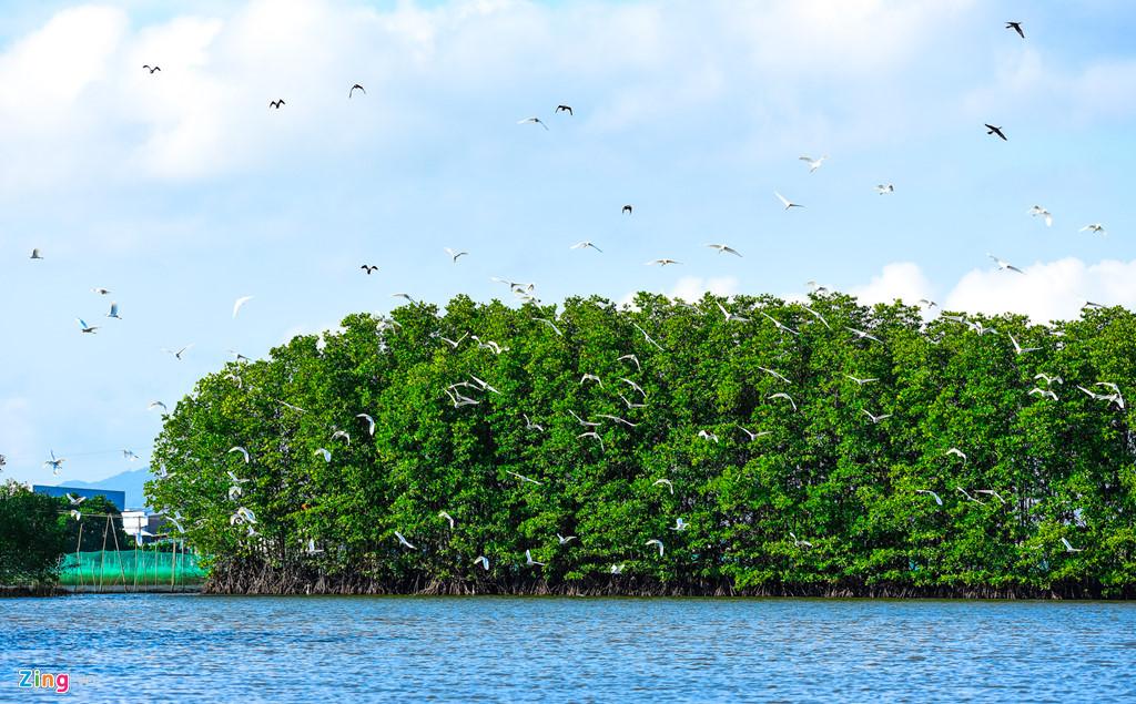 Chim, cò bay dày đặc ở khu rừng ngập mặn tạo nên bức tranh thiên nhiên kỳ thú.