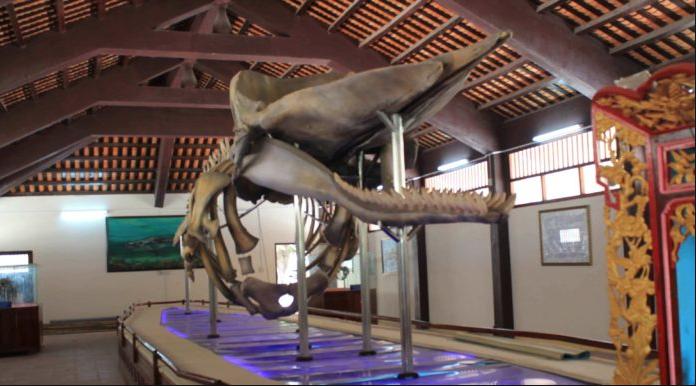 Bộ xương cá voi dài gần 20m tại nhà trưng bày cốt Ông Hải Nam tại Vạn An Thạnh.