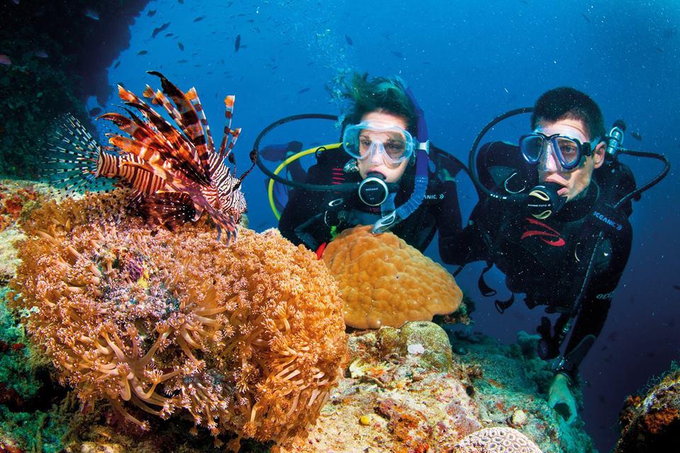 Hay lặng biển ngắm san hô là những trãi ngiệm bạn không nên bỏ lỡ khi đến Nam Du