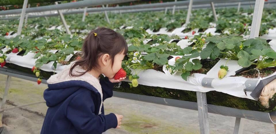 Vườn dâu Hoa Thắng Thịnh Đà Lạt