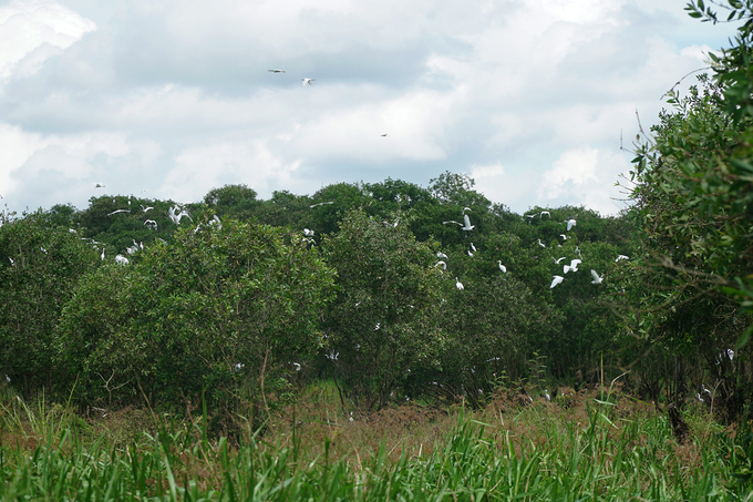 Rừng là nơi sinh sống của nhiều loài động thực vật, chủ yếu là các loài chim, cò.