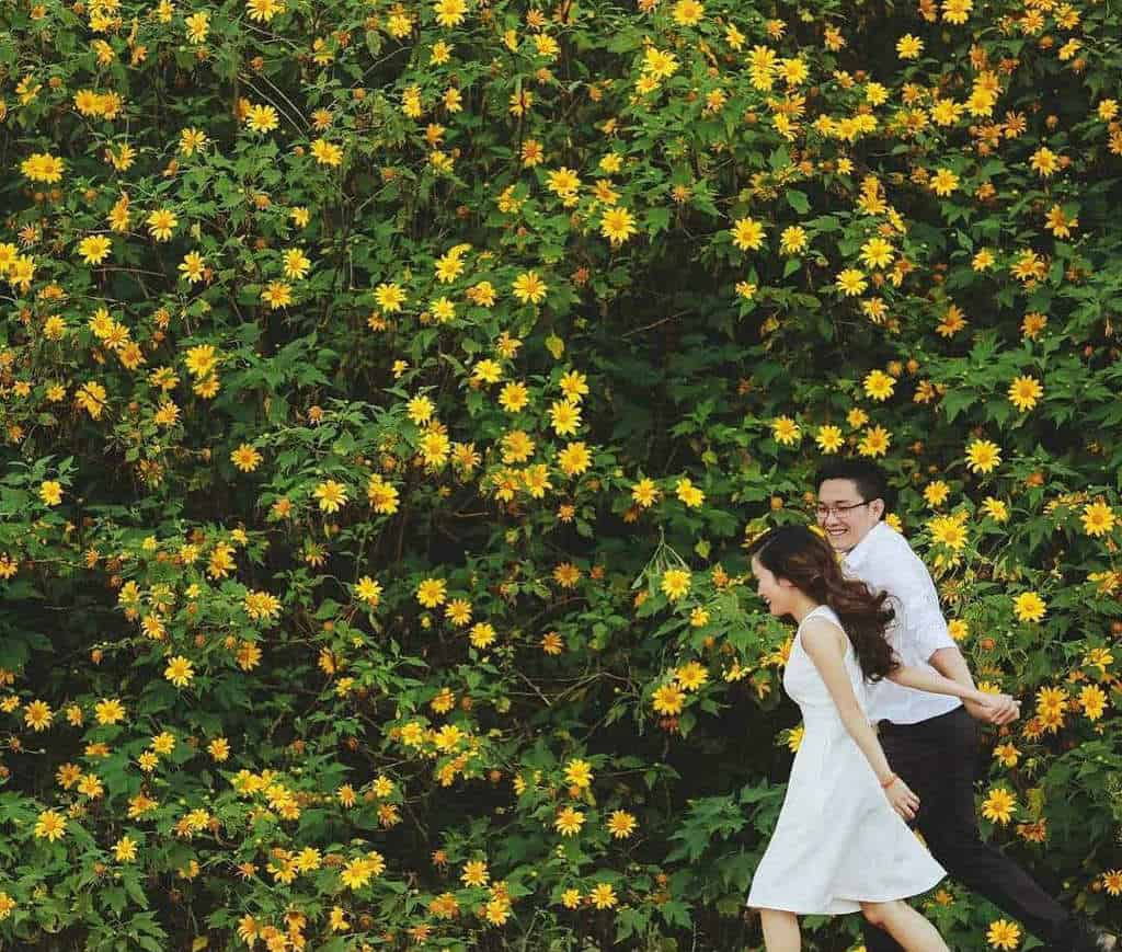 9 cung đường săn hoa dã quỳ đẹp nhất Đà Lạt - Du Lịch Chất