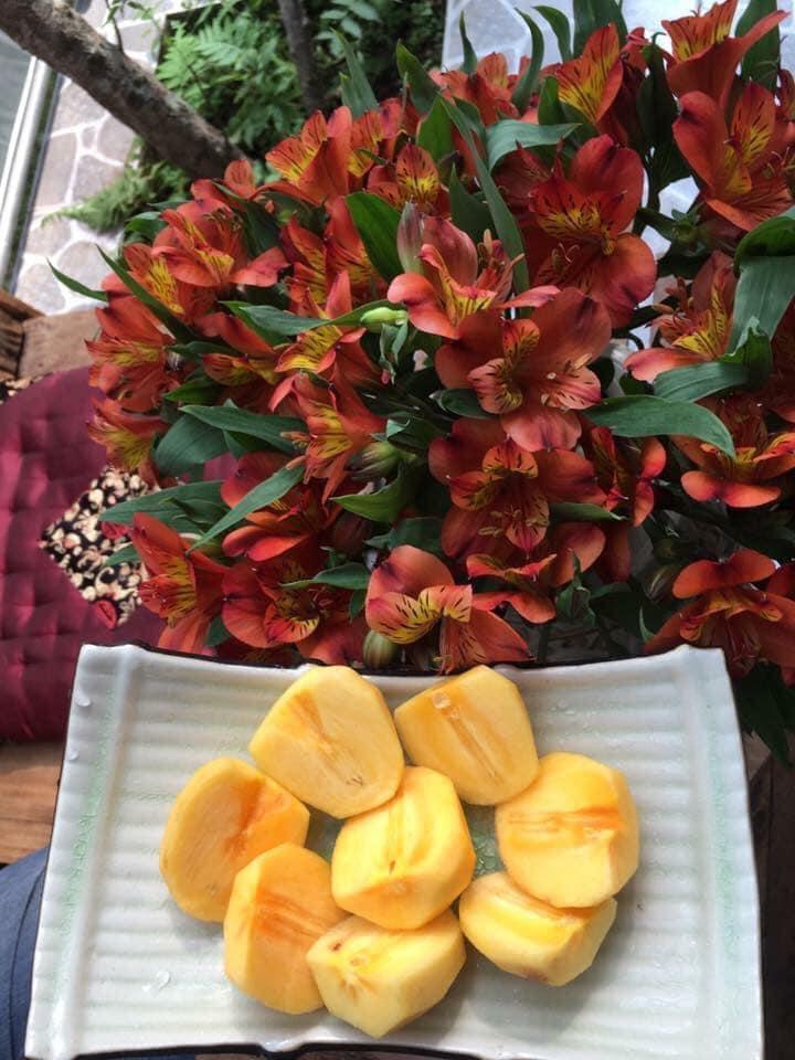 Hái hồng đèo mimosa