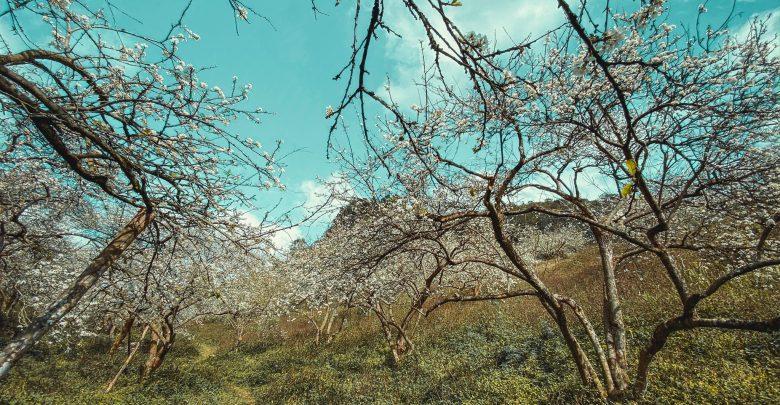Phiêng Cành, Vân Hồ, Lóng Luông, tiểu khu Ba Khe, Thông Cuông, Pa Phách, Tân Lập, bản Áng
