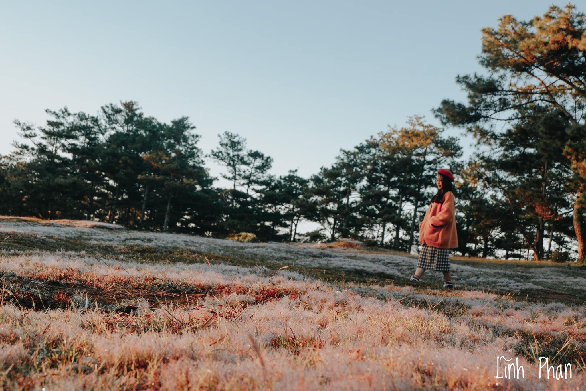 lên Đà Lạt săn cỏ hồng