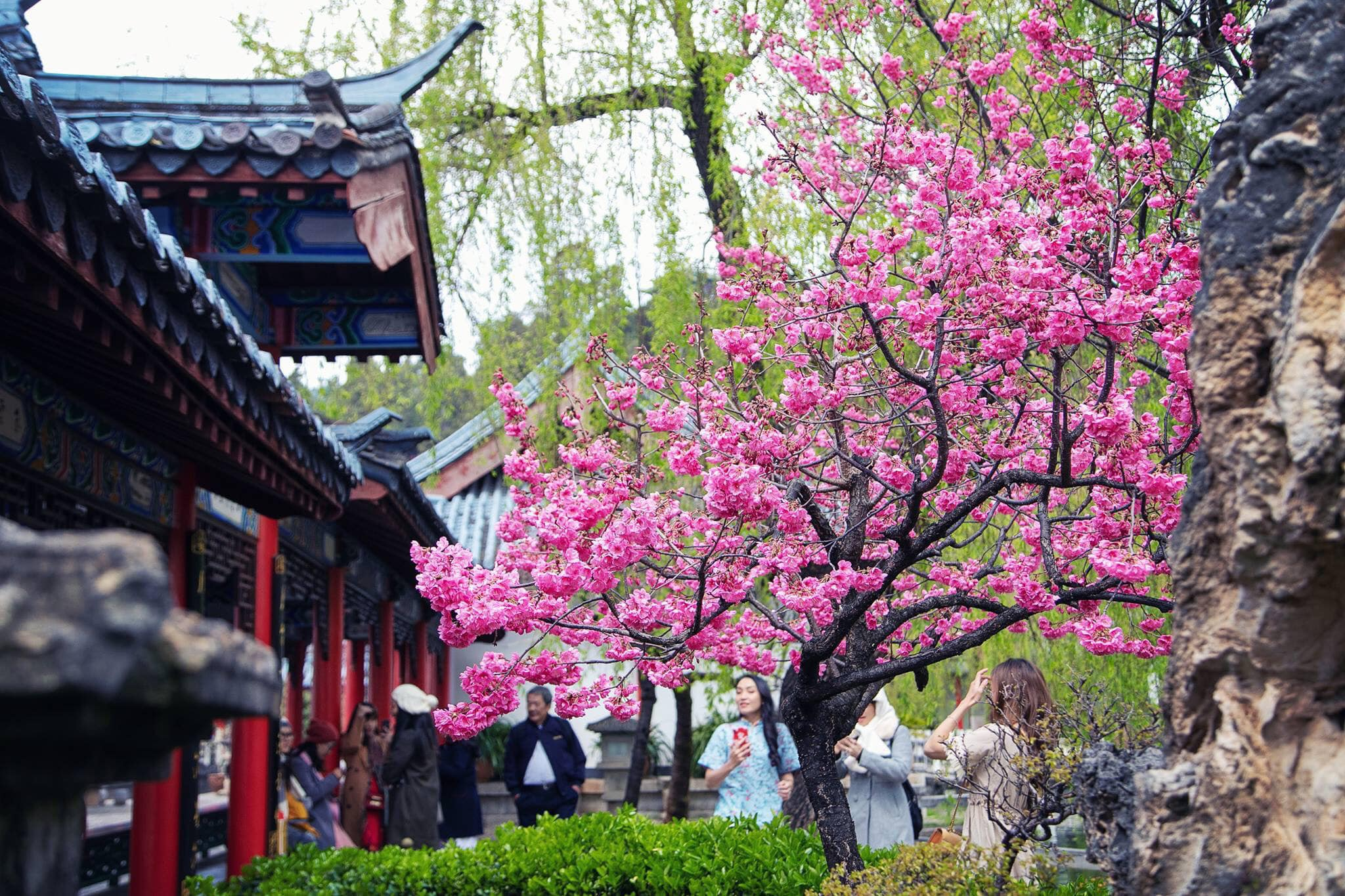 Bộ ảnh cực đẹp du lịch Lệ Giang – Côn Minh – Shangrila tháng 3 siêu đẹp