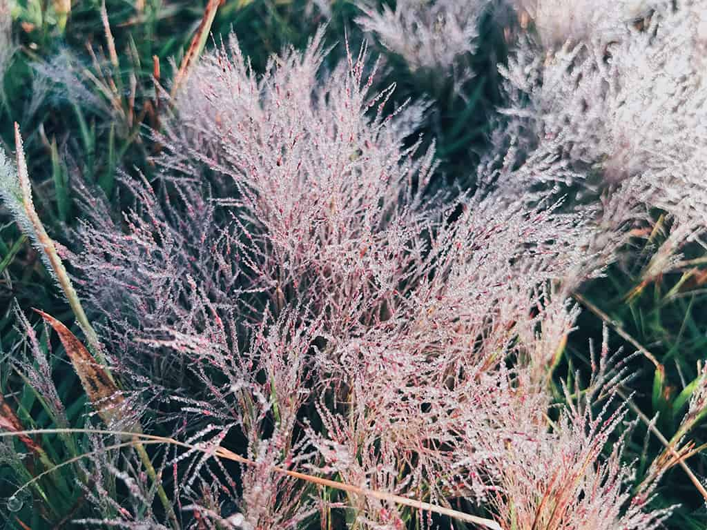 đồi cỏ hồng Đà Lạt đẹp nhất