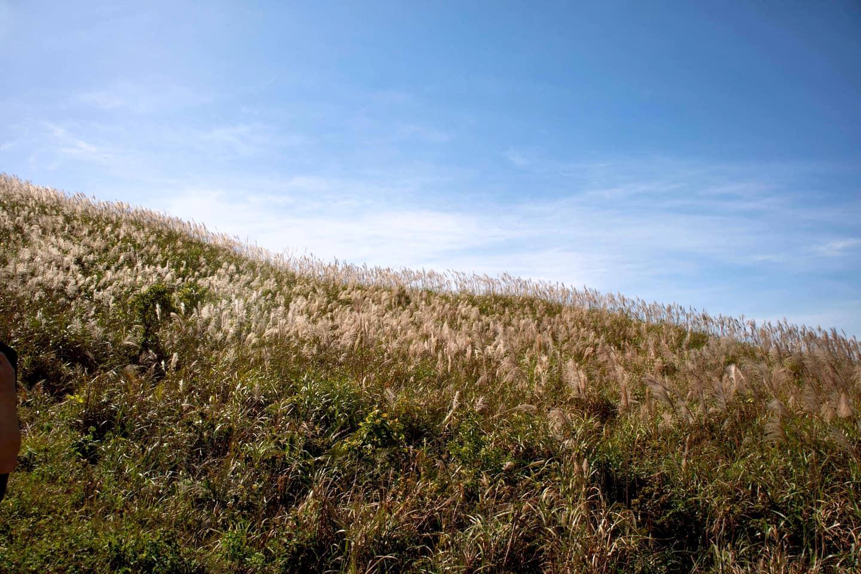 Đến Bình Liêu ngắm đồi cỏ lau đẹp bình dị, mộng mơ như trong mơ