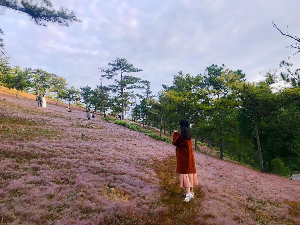 Có đồi hoa cỏ hồng/đồi cỏ tuyết