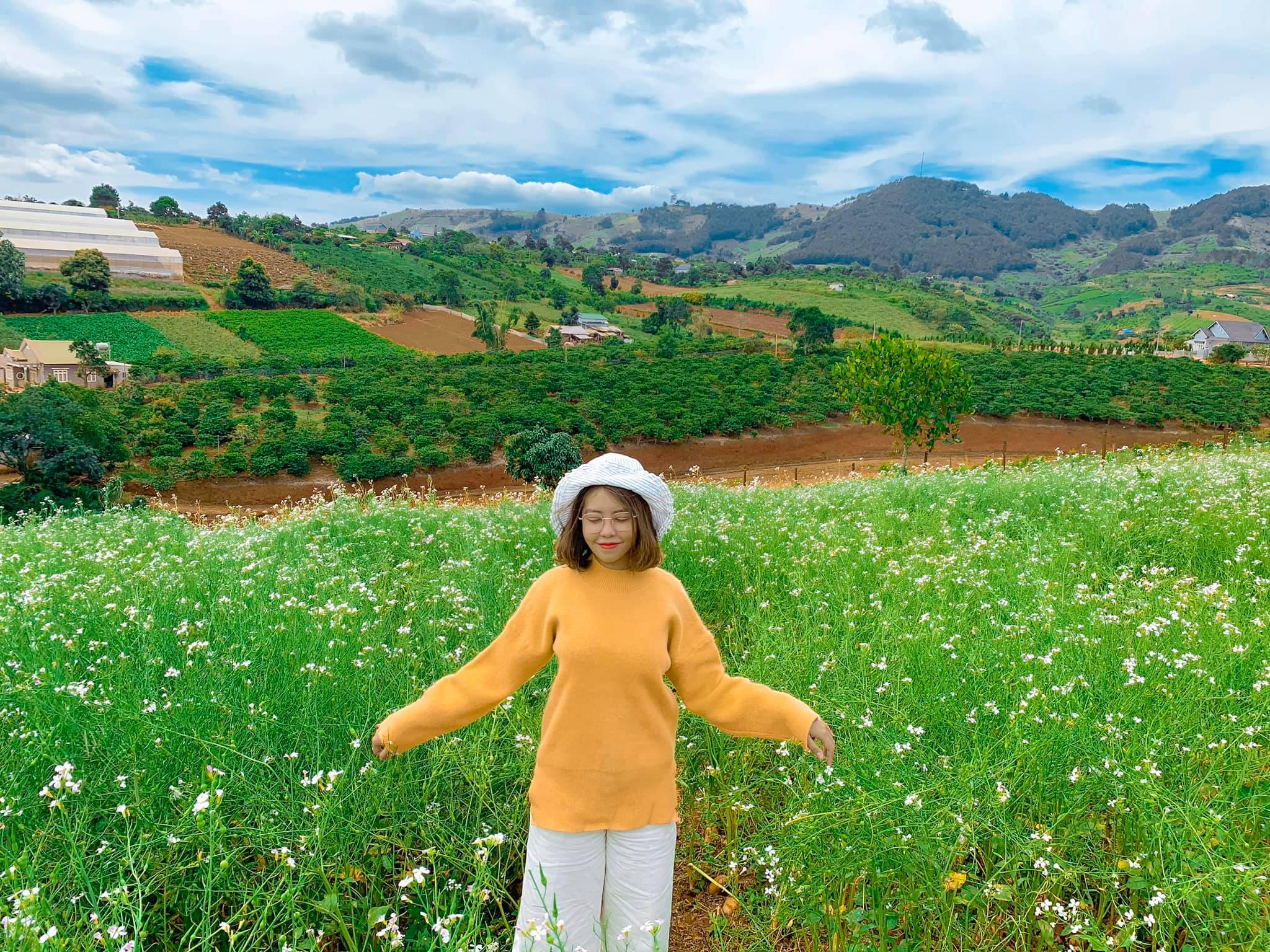 Có mùa hoa cải trắng muốt nở rộ