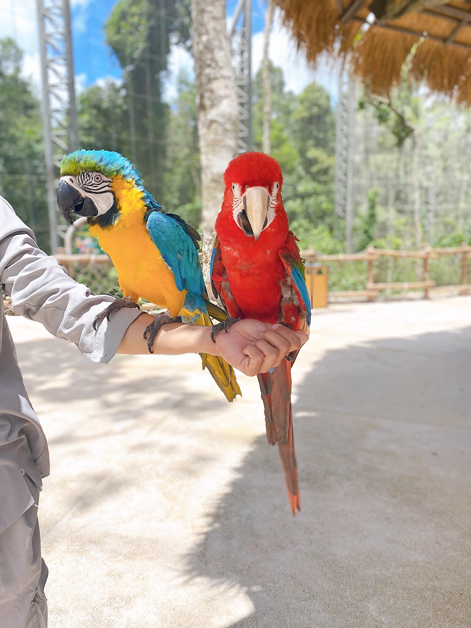 VinWonders Phú Quốc, Safari Phú Quốc