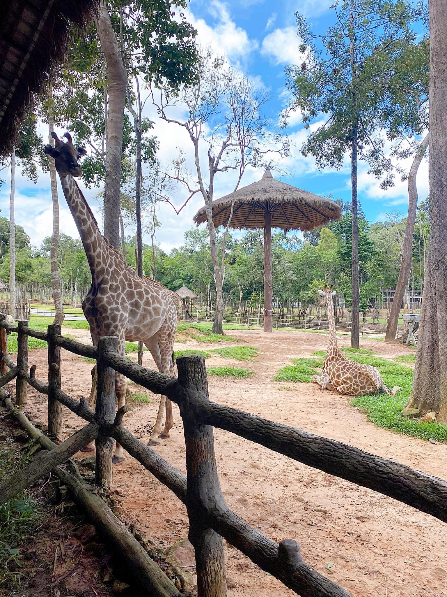 VinWonders Phú Quốc, Safari Phú Quốc, hưu cao cổ