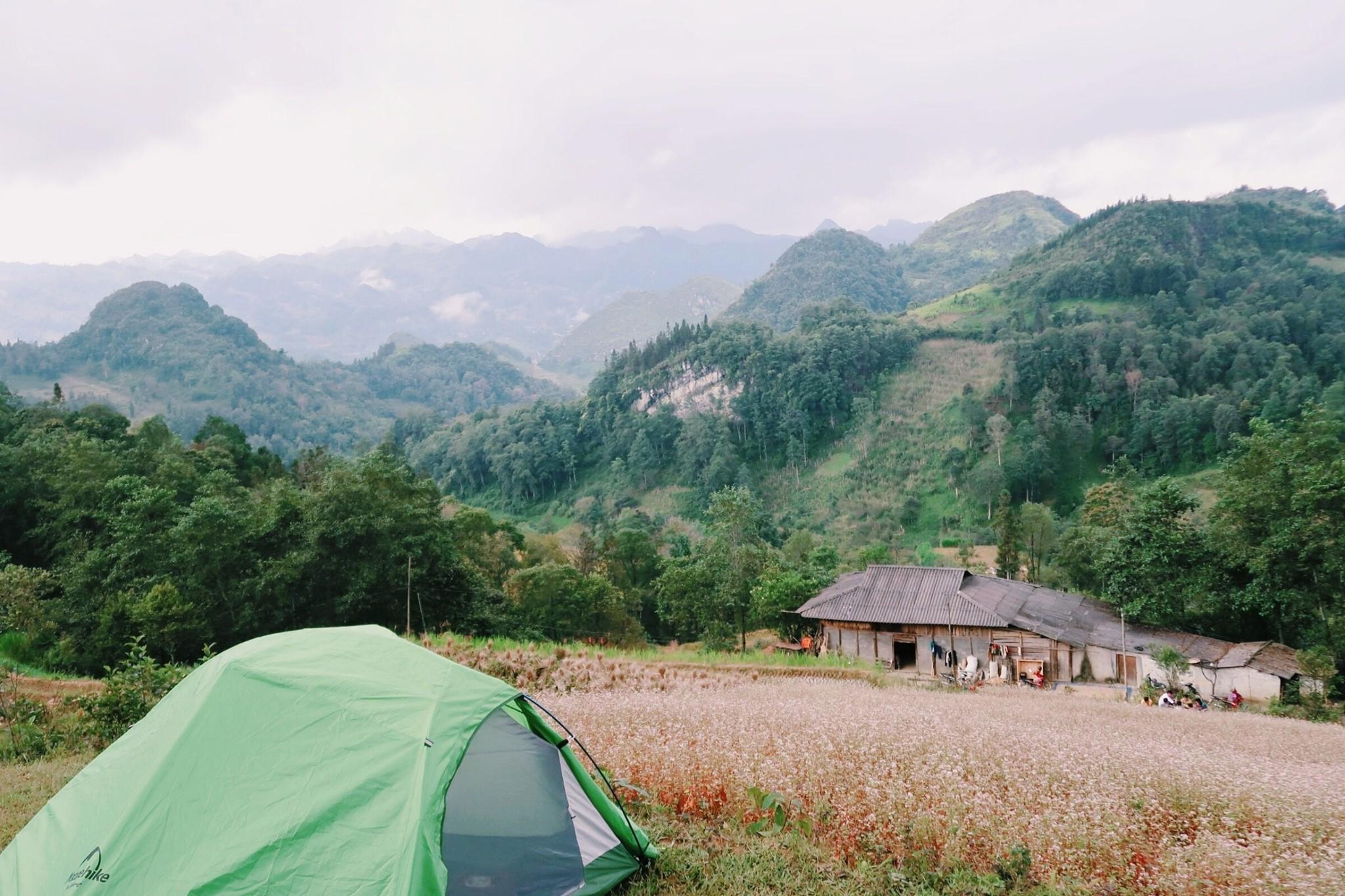 Cắm trại trên đồi hoa tam giác mạch