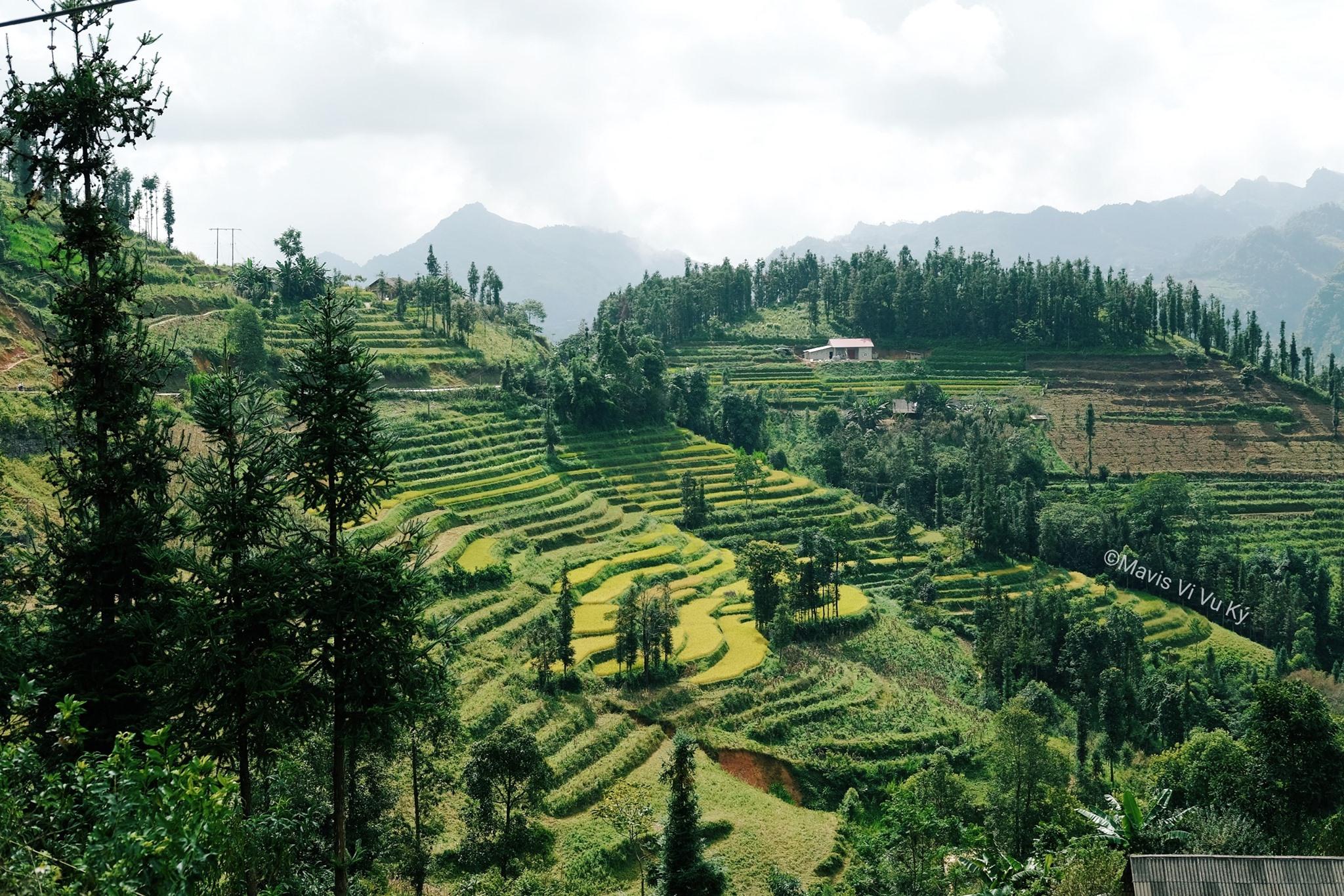 Thung lũng ruộng bậc thang dưới ánh nắng óng vàng