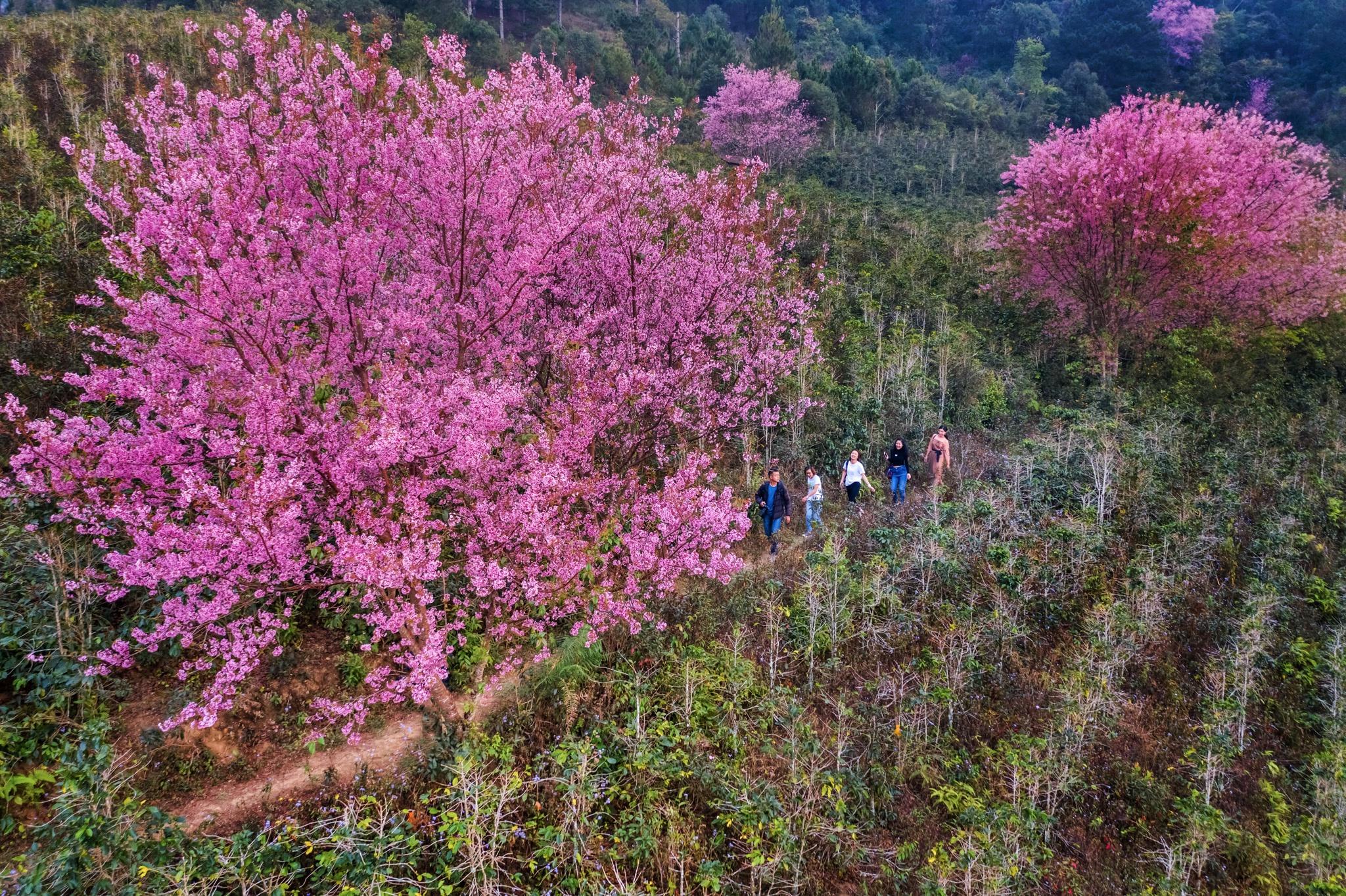 Rừng Đào hồ Tuyền Lâm