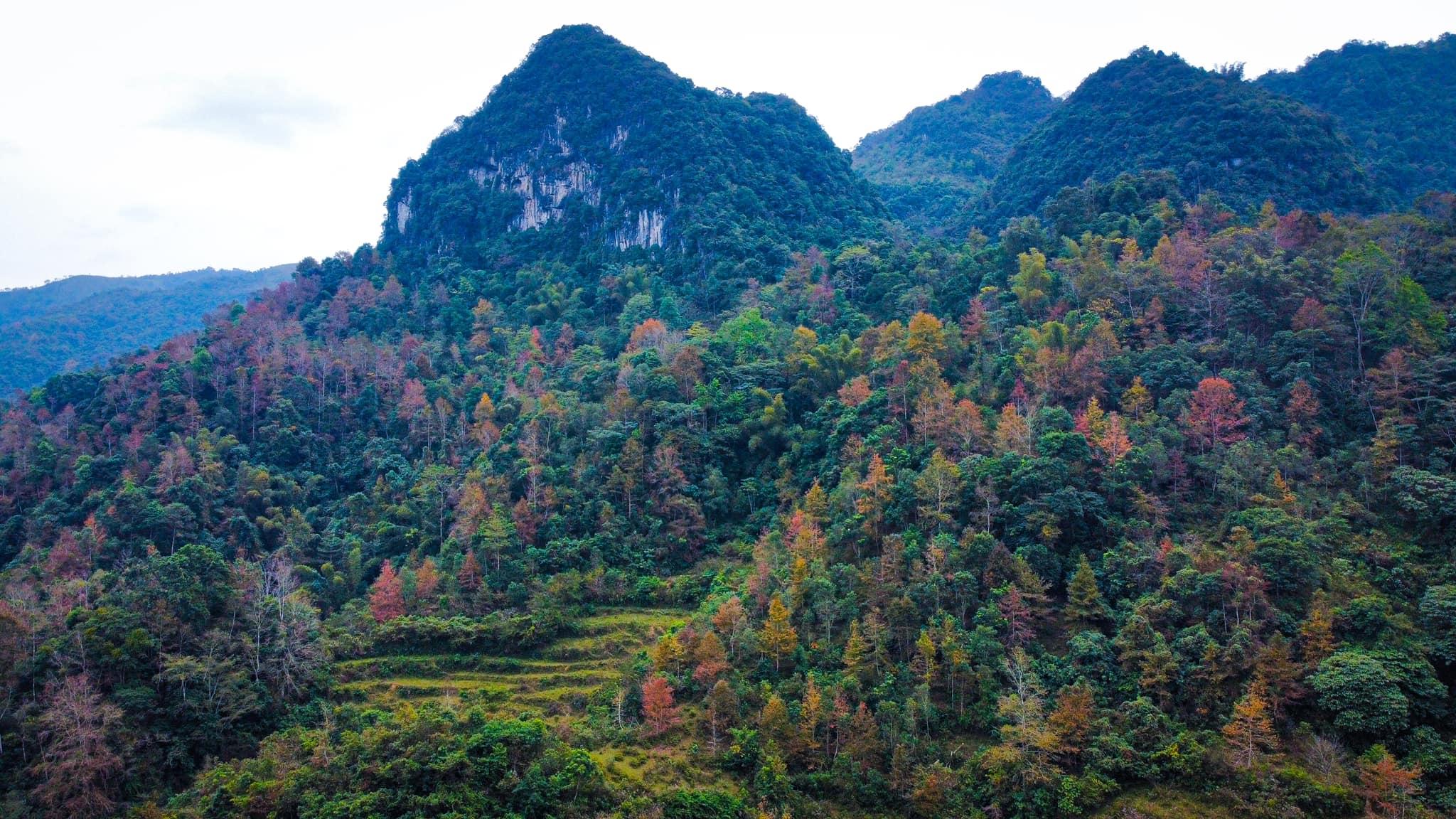 Mùa lá đỏ Trùng Khánh