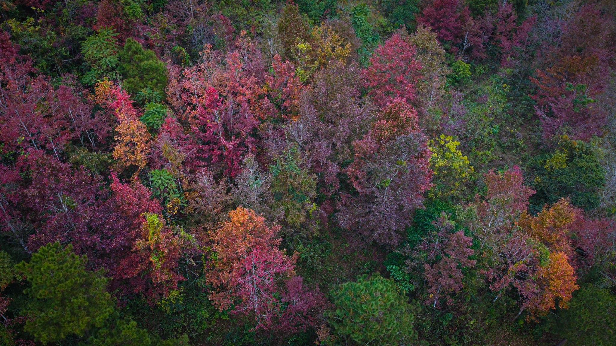 Mùa lá đỏ Trùng Khánh, Cao Bằng