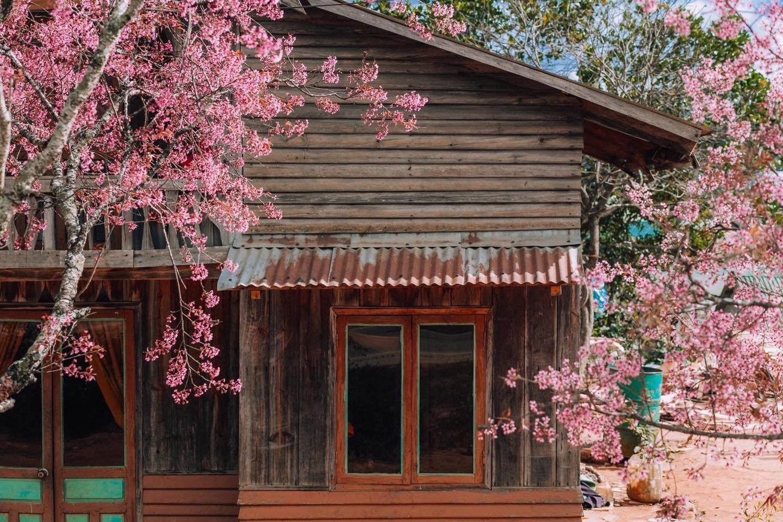 Lý do nên chọn KUPID cho kỳ nghỉ của bạn tại Đà Lạt